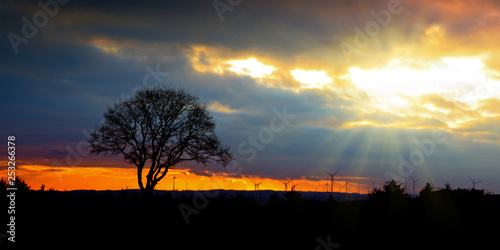 Colorful sunset with tree and wind wheels .Nature background. - 253266378