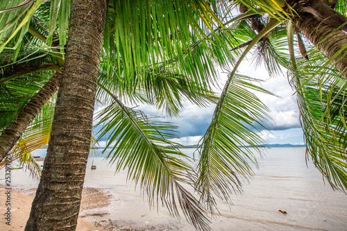 The background of blurred green coconut leaves, on the coast and with the wind blowing all the time, is a sun shelter in the hot time when people walk along the beach, the results can be eaten