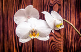 Branch of a White orchid on a brown wooden background