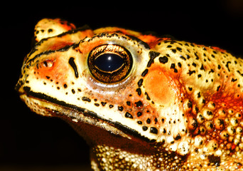 Frog animal looking from lovely eyes