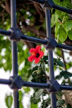 "Постер, картина, фотообои ""prison flowers"""