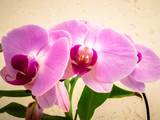 Beautiful bunch of Orchid flowers