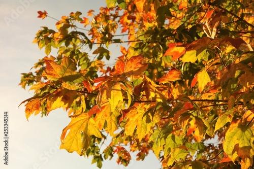 mata magnetyczna Colourful Autumn Leaves.