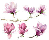 Watercolor magnolia and branch set. Hand painted flowers isolated on white background. Floral elegant illustration for design, print. - 253376370