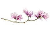 Watercolor magnolia horizontal card. Hand painted flowers on branch isolated on white background. Floral elegant illustration for design, print. - 253376395