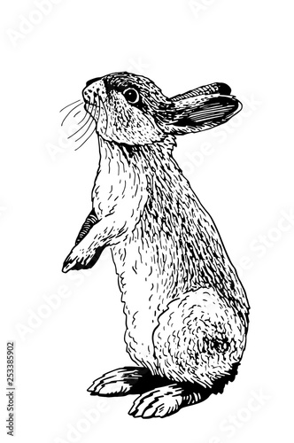Graphical bunny isolated on white background,vector illustration,sketch