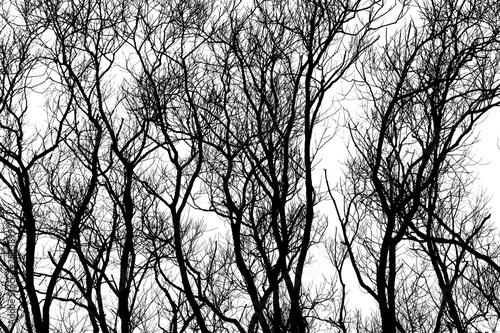 Trees Silhouettes © skunkeye