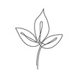 Eucalyptus leaf continuous line drawing. One line . Hand-drawn minimalist illustration, vector.