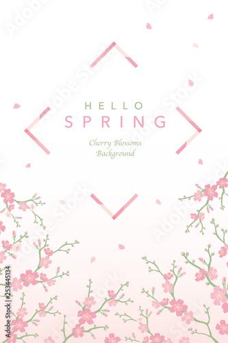 桜 背景イラスト - 253445134