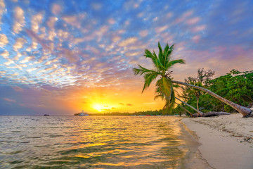 Beautiful sunrise over tropical beach and palm trees in Dominican republic © sborisov