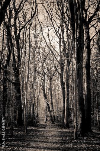 Forêt de Marlioz Haute-Savoie Rhône-Alpes-Auvergne - 253465974