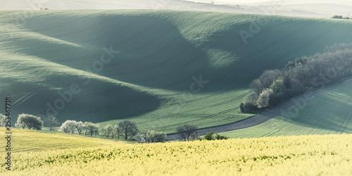 Agricultural spring landscape