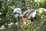 couple of stork sitting in a tree