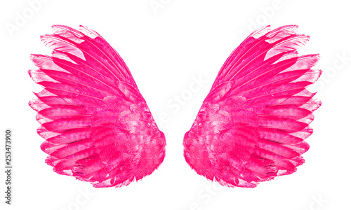 pink wings an isolated on white background - 253473900