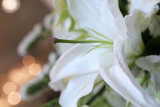beautyful white lily in a side view
