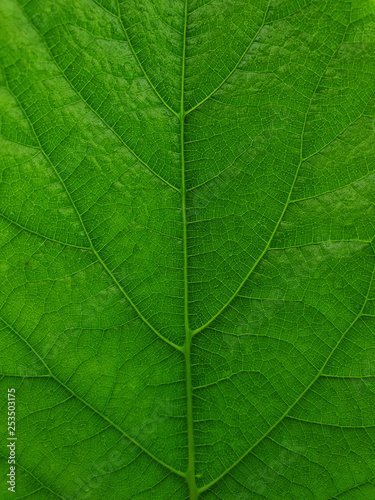 nature green leaf for wallpaper and background - 253503175