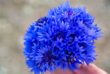 bouquet of wild flowers of cornflowers