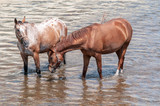 Fototapeta Horses - konie © Piotr