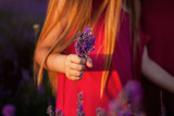 bouquet of lavender flowers in the hand of a child. gift mom collected with his own hands. Violet.