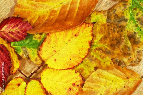mata magnetyczna Autumn leaves.