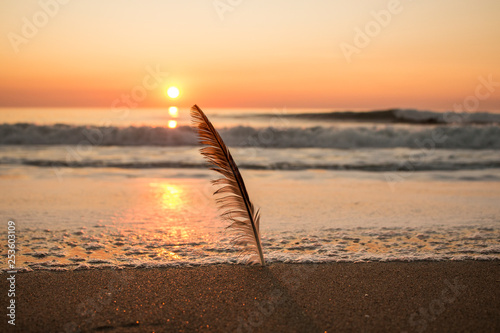 Beautiful sunset at beach with bird's feather backlit - 253603109
