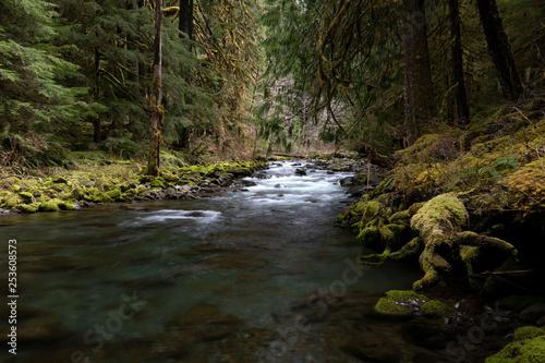 Foto Murales Olympic National Park, WA, USA.