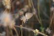 butterflies alight on flowers