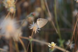 Fototapeta Dmuchawce - butterflies alight on flowers © Makmur Asyura