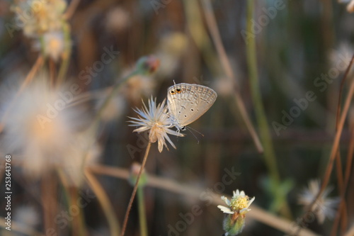butterflies alight on flowers - 253643768