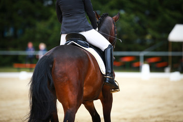 Horse dressage horse in closeup with rider from behind photographed in an exam while initiating a turn..