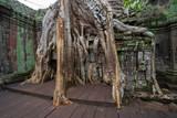Ta Prohm Temple, Cambodia: Tree grown into building
