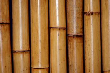 Nahaufnahme Bambus als Bildhintergrund © zeralein