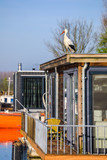 Storch auf einem Hausboot