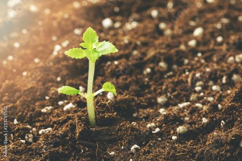 new seedling growing in fertile soil closeup