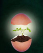Broken Eggshell With Growing Plant on Chalkboard Background and Copy Space