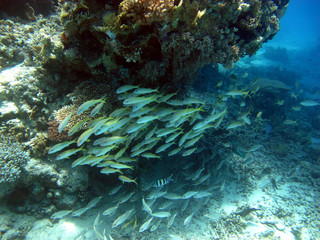 The beauty of the red sea - beautiful bright fish, coral, turquoise water. Underwater world. Reef.