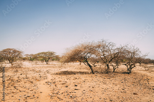 Desert trees in Africa