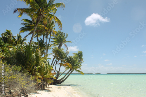 Tropical turquoise sea with palmtrees