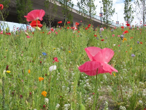 Wildflowers in field - 253891799