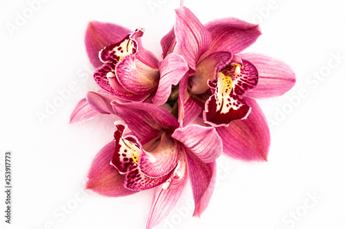 Flowers on a white background close-up