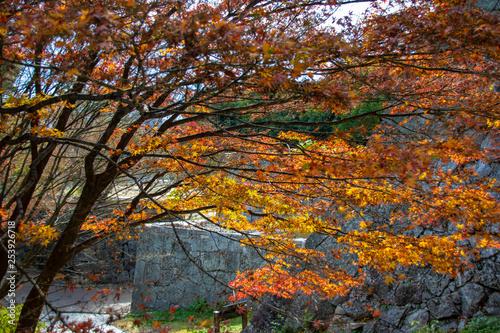 mata magnetyczna leaves autumn