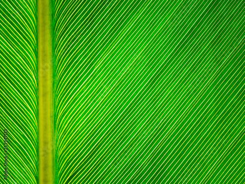 leaf background - 253949133