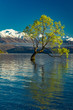 Leinwandbild Motiv The Lonely tree of Lake Wanaka and snowy Buchanan Peaks, South Island, New Zealand