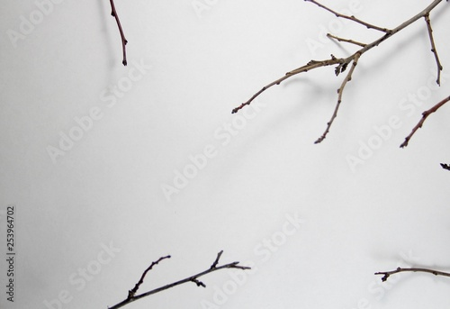 branch - 253964702