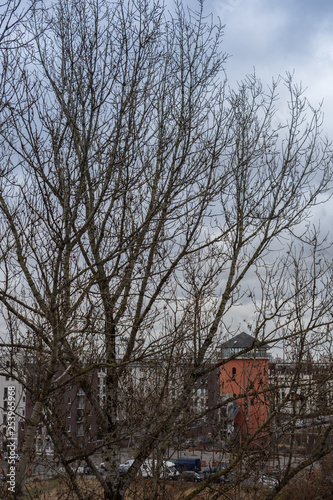 Winter Berlin view from the window, tree without leaves