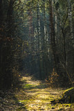 Fototapeta Forest - Las © Kajetan