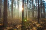 Fototapeta Fototapety na ścianę - Vibrant sunlight in spring forest © dzmitrock87