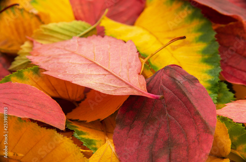 Group of colorful autumn leaves background © nata777_7