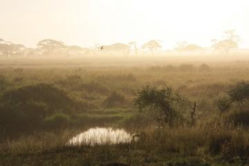 Morgendunst über der Serengeti