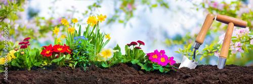 Leinwanddruck Bild Planting spring flowers in sunny garden